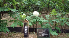 f:id:noblekanazawa70:20170510193553j:image
