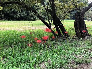 f:id:noblekanazawa70:20180920134026p:image