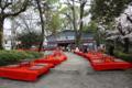 [京都][KYOTO]2013.04.01円山公園にて「雅」