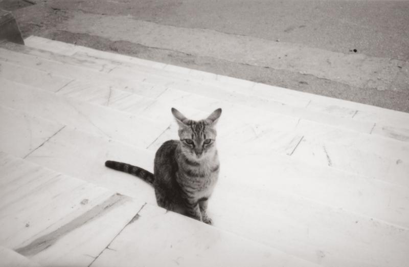ギリシアの猫