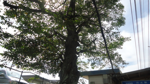 f:id:nobumichi02:20121006105145j:image:h150