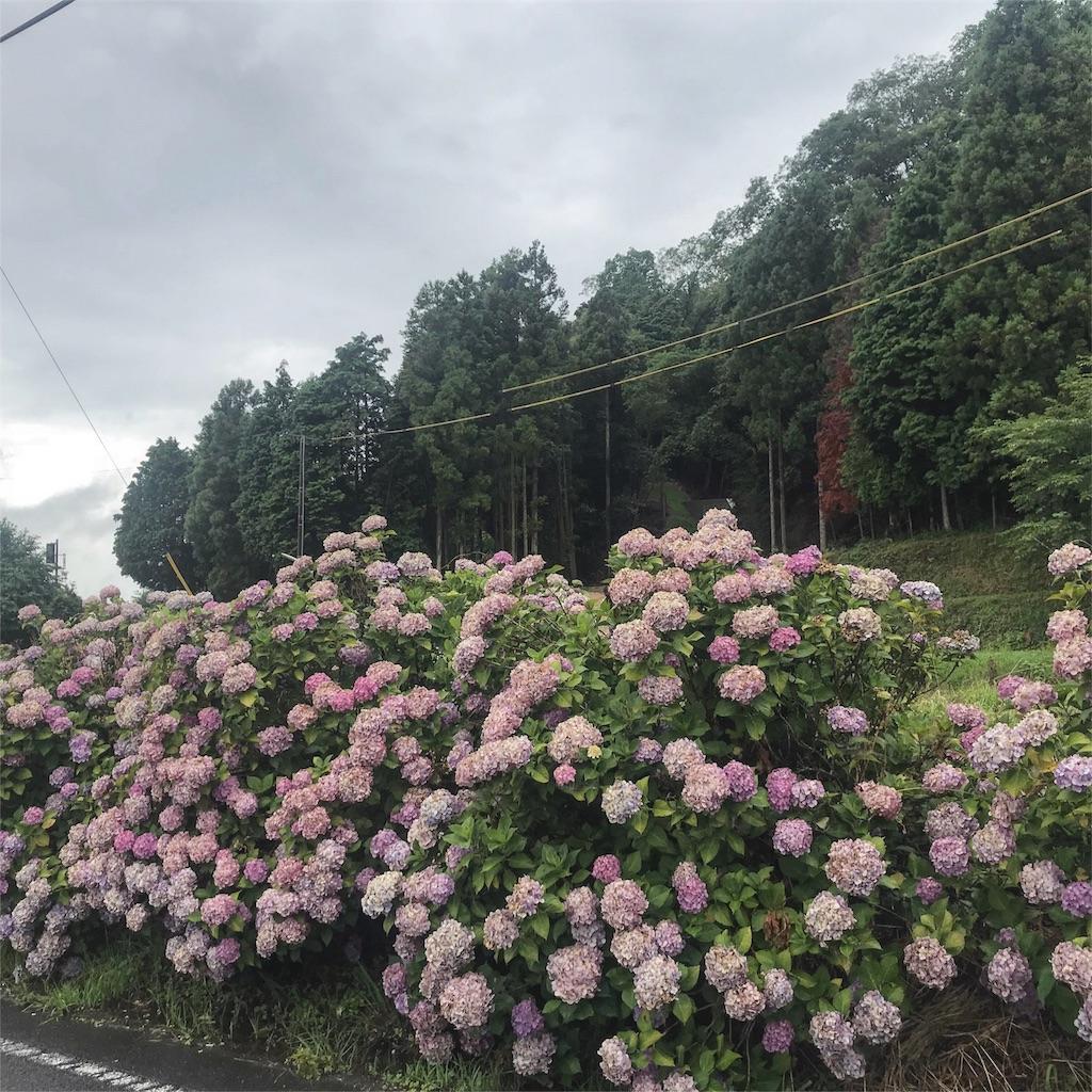 f:id:nobunobu1210:20180706233211j:image