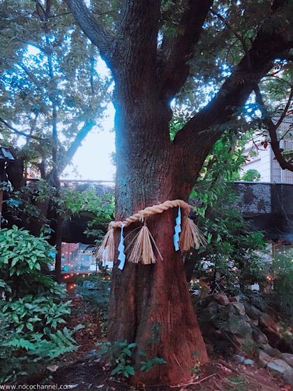 逞しく聳え立つ木