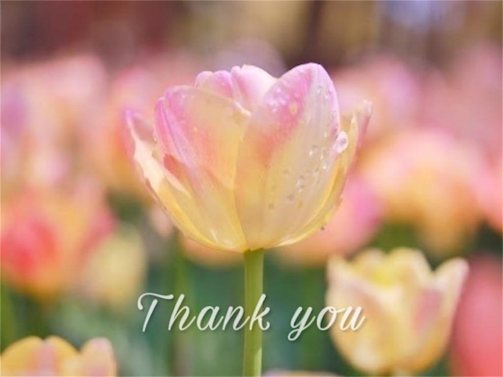 ピンクのチューリップとありがとうの文字