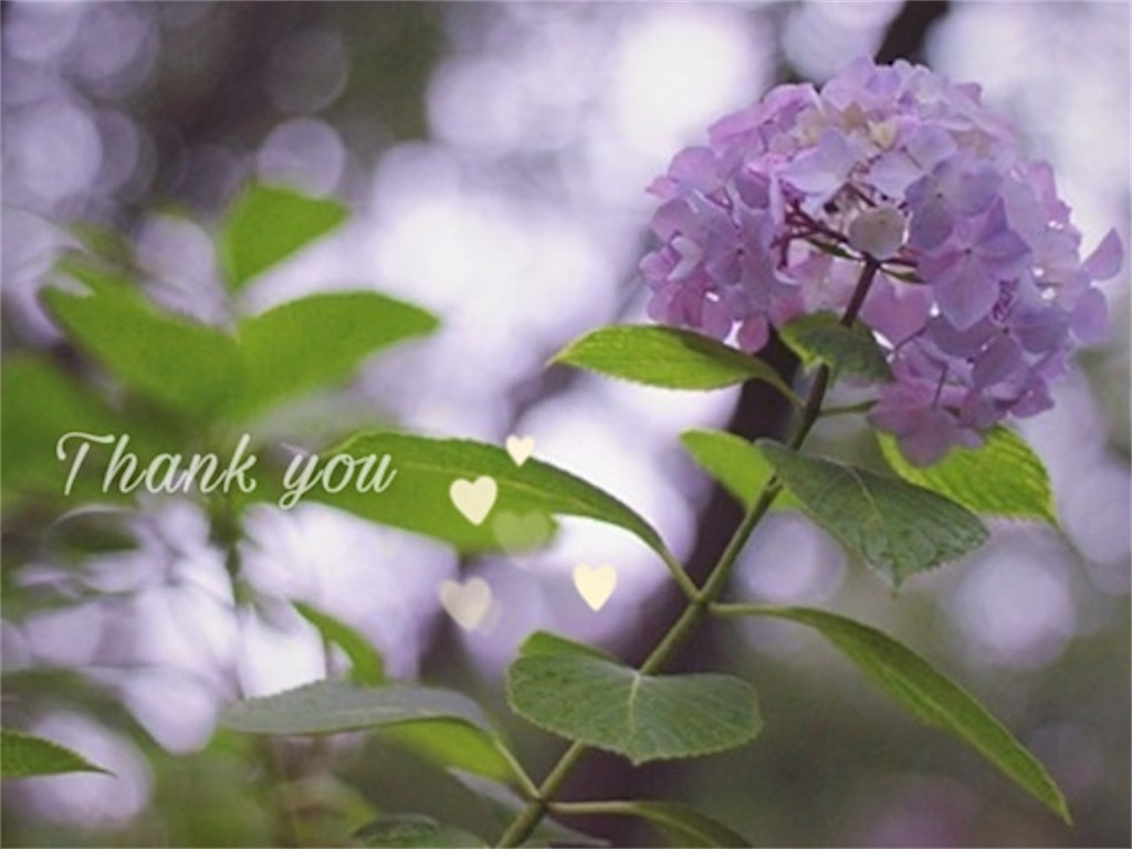 紫色のあじさいの花とありがとうの文字