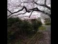 2013年3月29日午後、東京都杉並区成田東、阿佐ヶ谷住宅中央広場