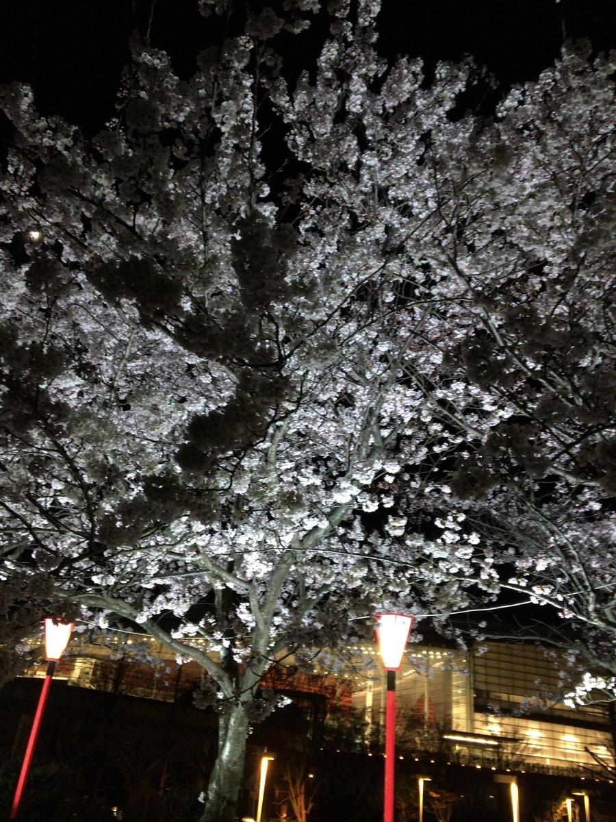 f:id:noharanohara:20190413164521j:plain