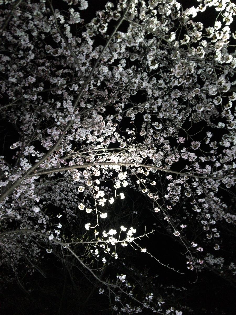 f:id:noharanohara:20190413170833j:plain