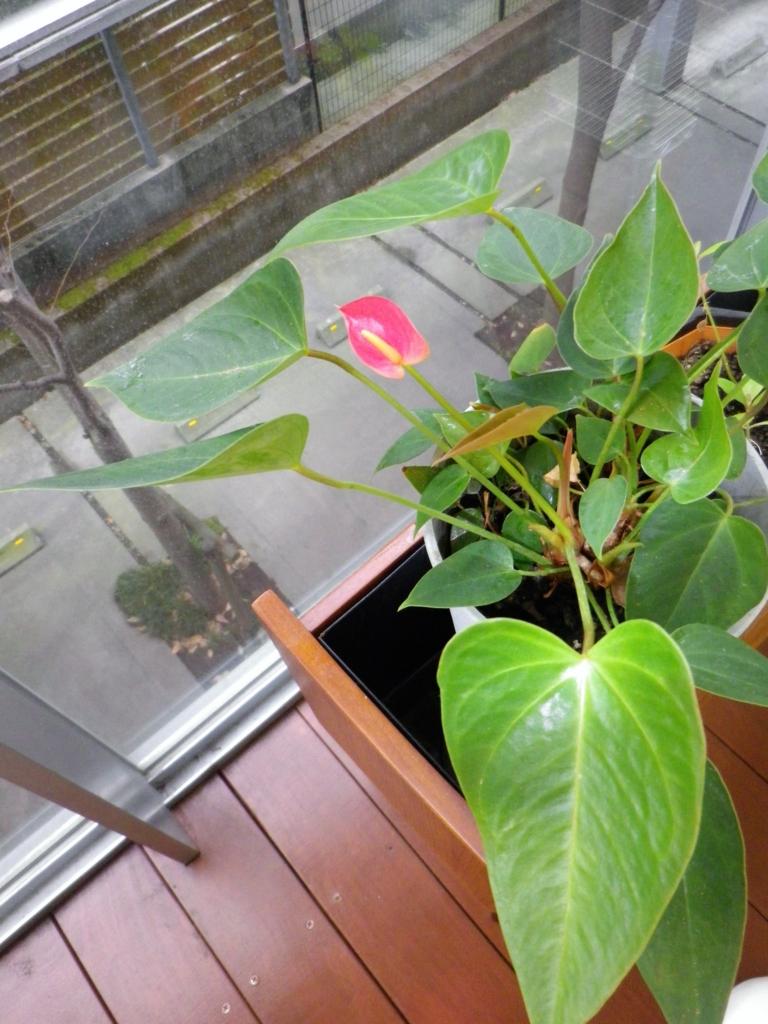 f:id:nohmi-kyosei:20100111214833j:plain