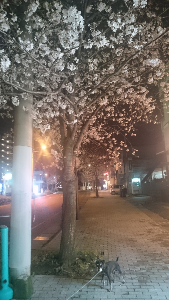 f:id:nohmi-kyosei:20170411200249j:plain