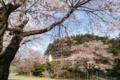 南川小学校の桜桜