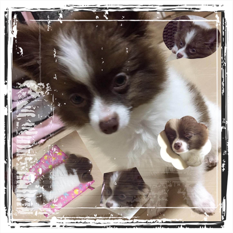 f:id:noi_mahalo-twodogs:20170810121527j:image