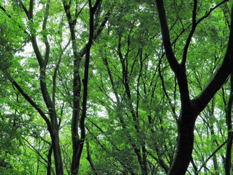 f:id:noir555:20120912231606j:image:w640