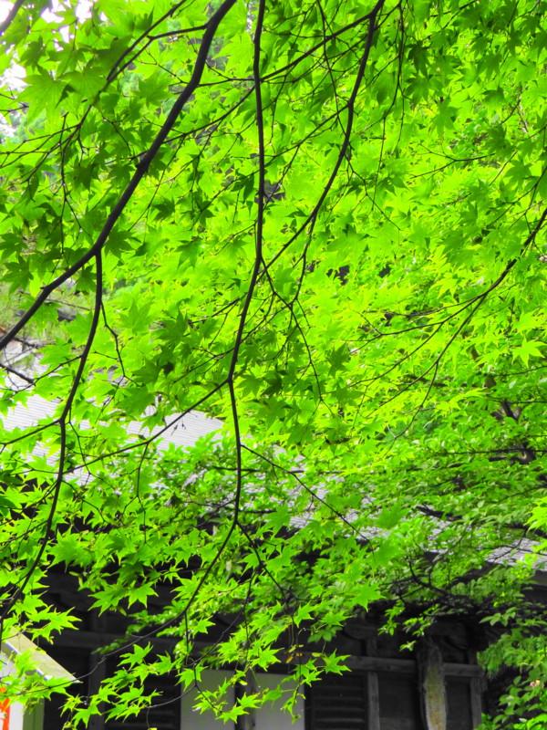 f:id:noir555:20121010175200j:image:w640