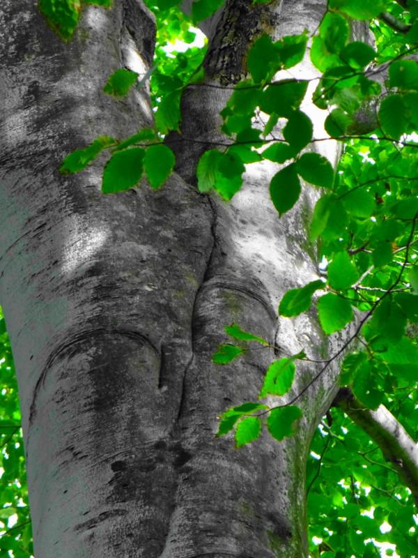 f:id:noir555:20121029183357j:image:w640