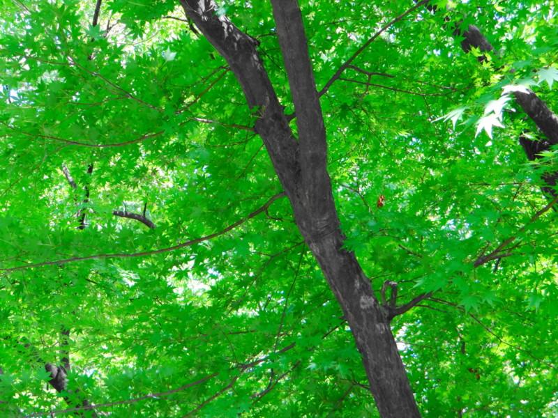 f:id:noir555:20121029185315j:image:w640