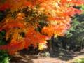 春日原生林紅葉