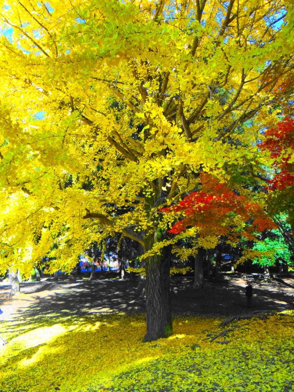 奈良公園浅茅が原