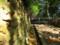 春日原生林入口