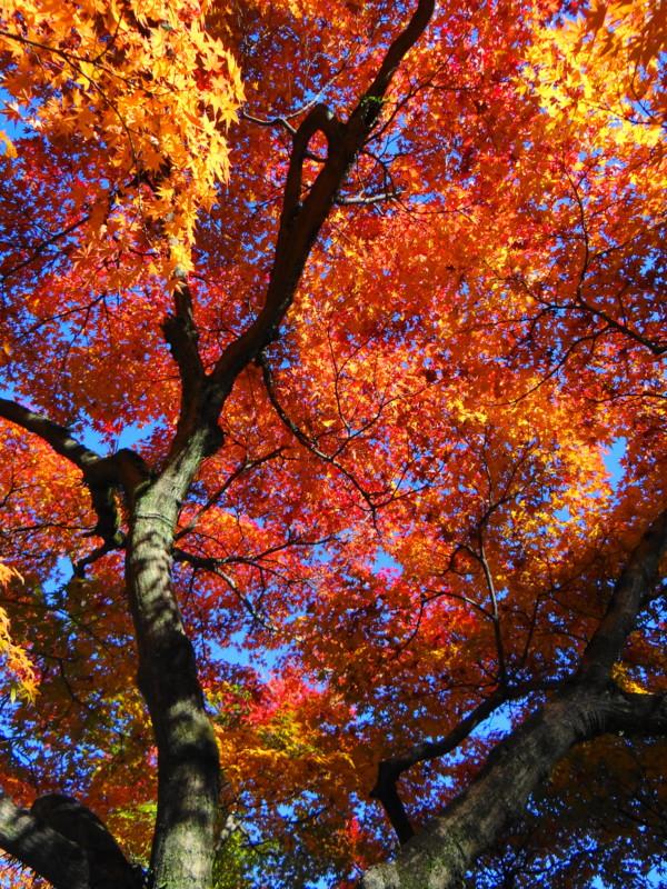 名勝奈良公園