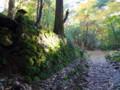 春日原生林