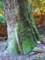 春日原生林・苔むす古木