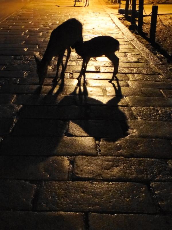 f:id:noir555:20121217185613j:image:w640