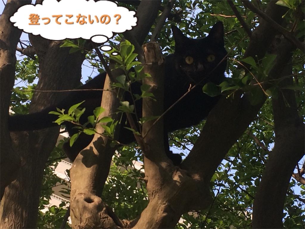 f:id:noirdaily:20170503201630j:image