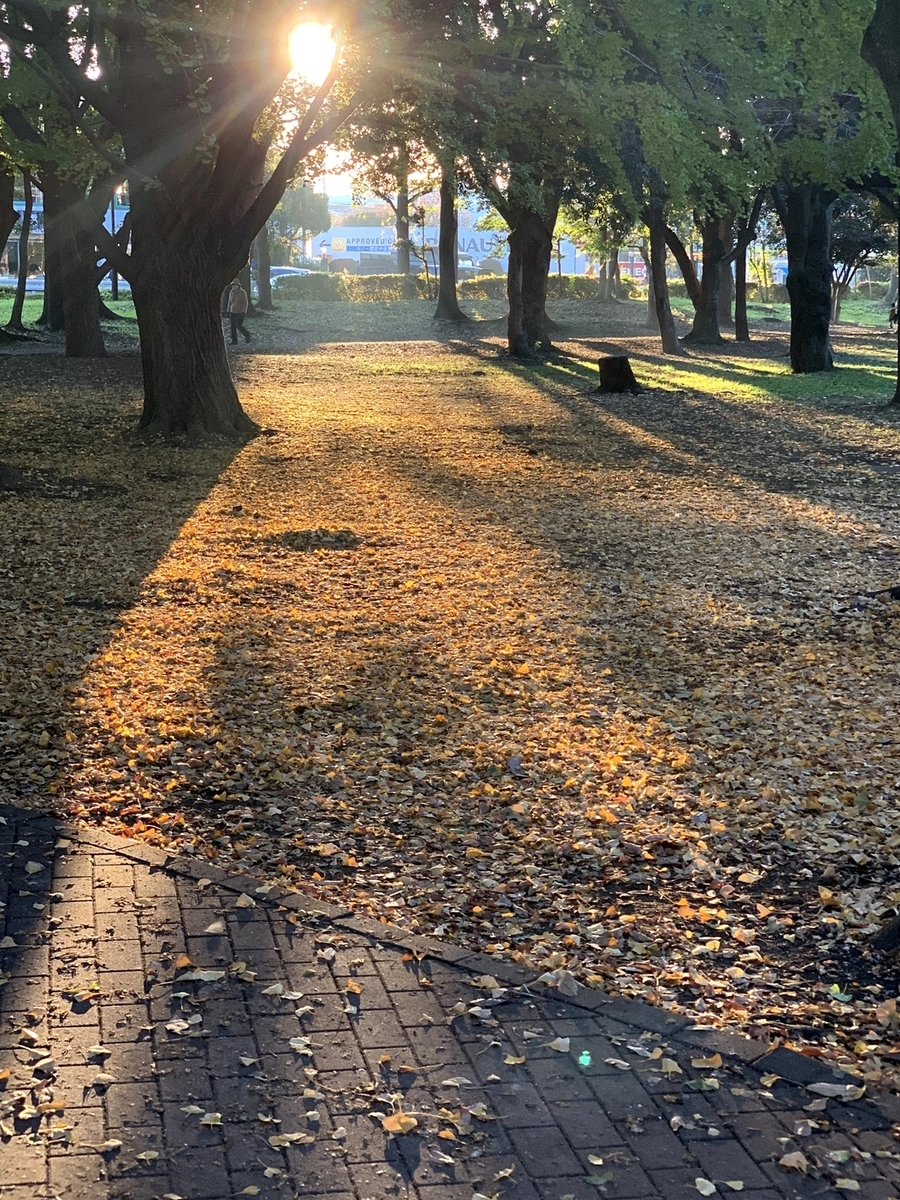 朝の公園、光の道