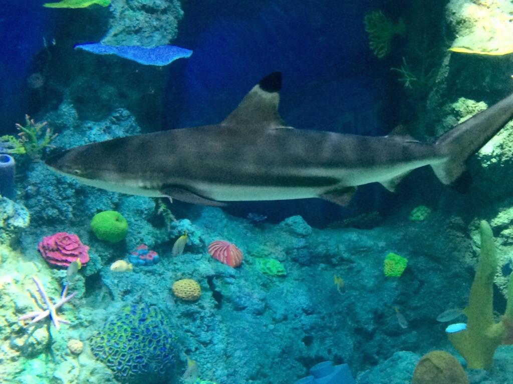 本物のサメが泳ぐ