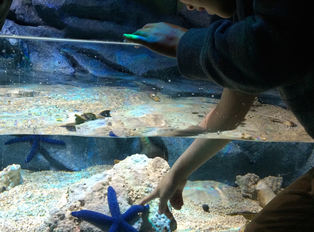 海の生物とのふれあいスペース