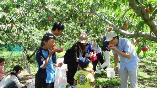 一宮御坂の桃狩り食べ放題時間無制限平成30年2018年オススメ農園農場直売所