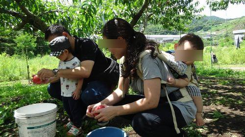山梨御坂子供高齢者シルバーにオススメ食べ放題ができる桃狩り農園農場