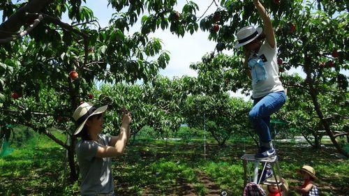 山梨御坂町子供高齢者シルバーにオススメ食べ放題ができる桃狩り農園農場