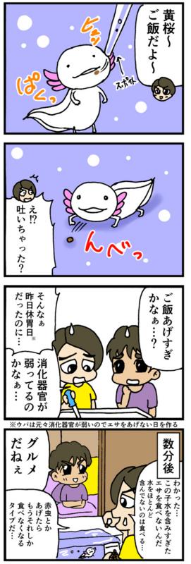 nomi4_160915-03