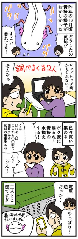 nomi4-170120-02