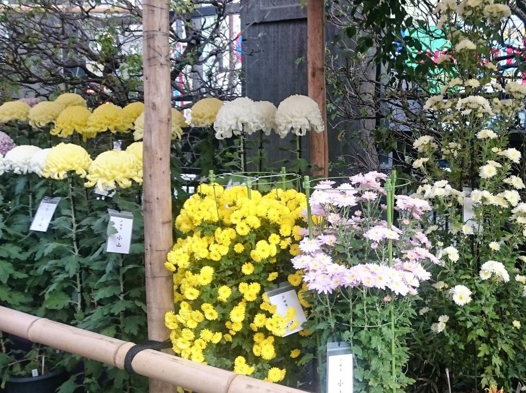 f:id:nomoto_shoko:20171113235628j:plain