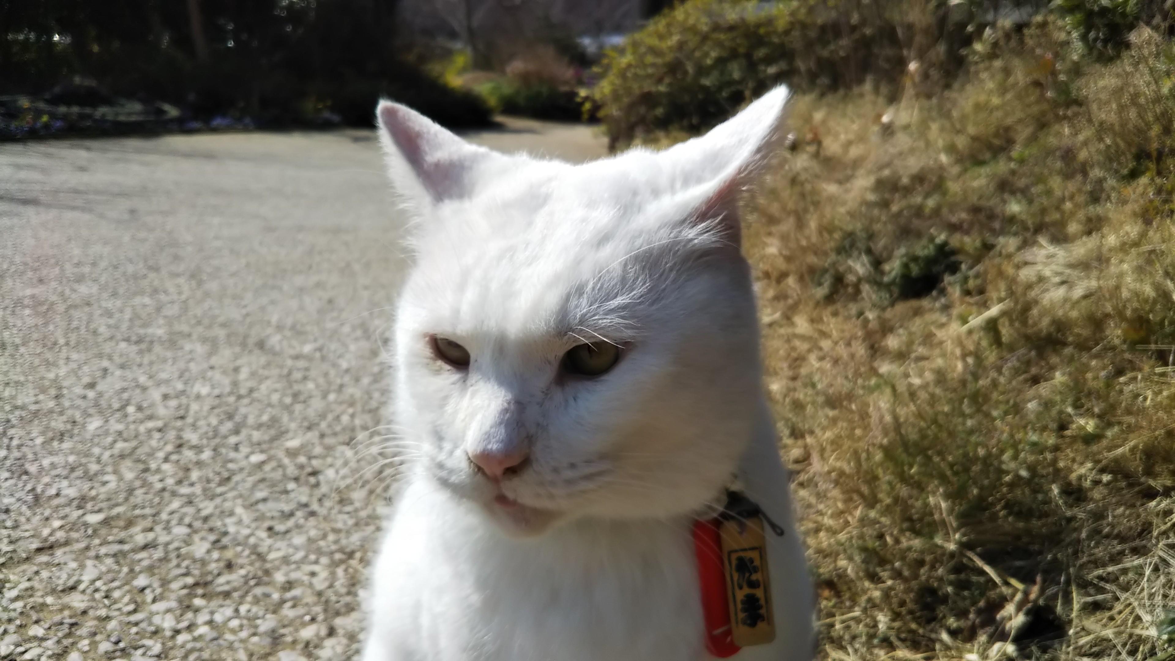 f:id:nomzakki:20190221140129j:image