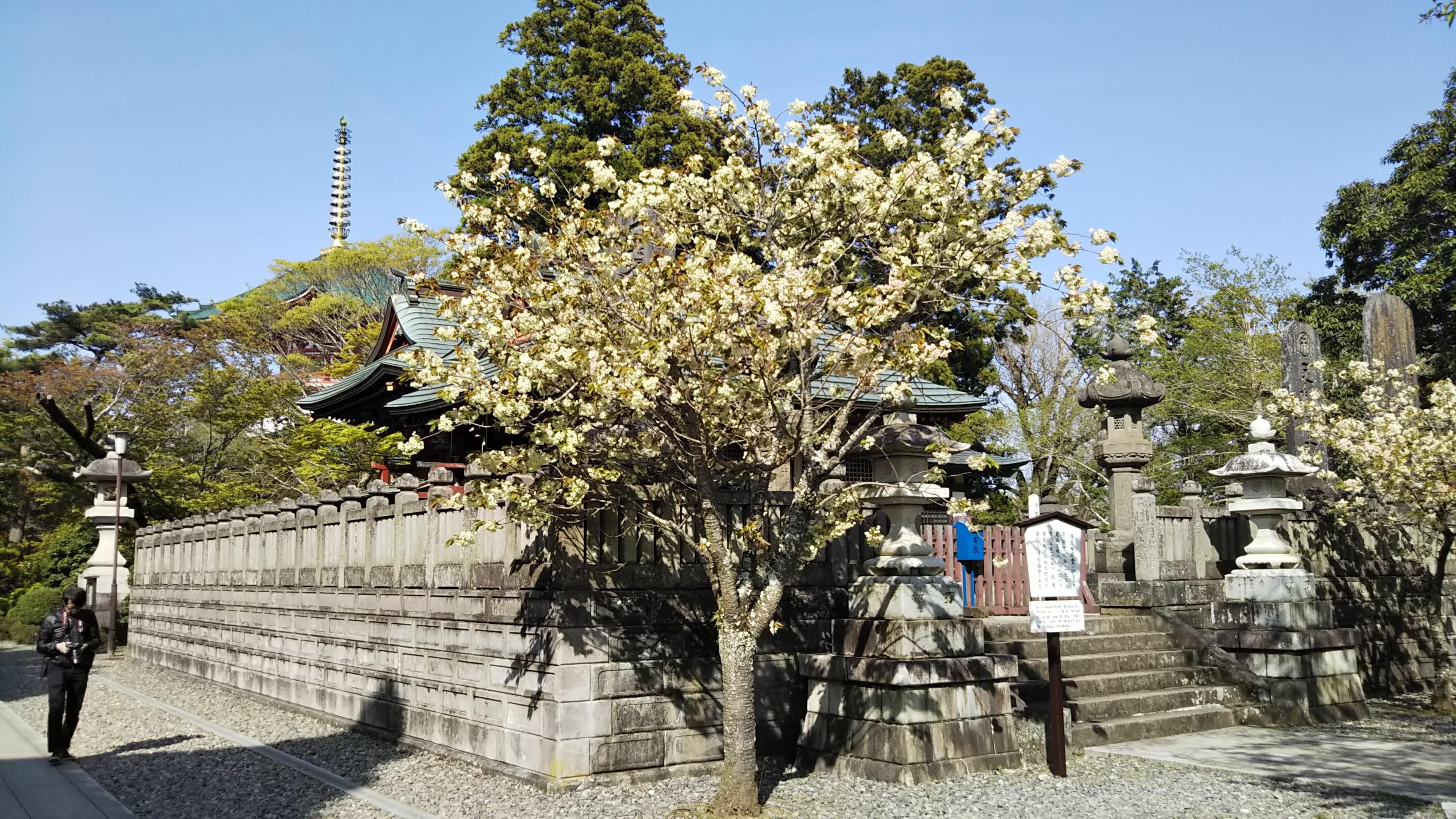 f:id:nomzakki:20190429211133j:image