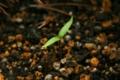 d-metel-sprout