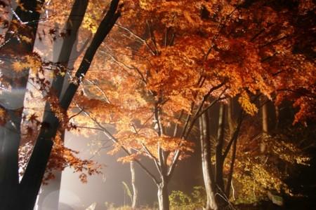 f:id:nonaka12:20091117171115j:image