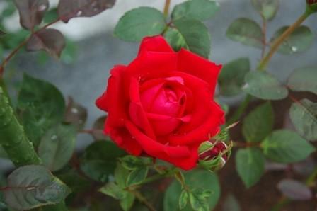 f:id:nonaka12:20110619063349j:image