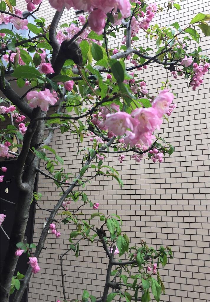 f:id:nonchan-happydays:20170412053036j:image