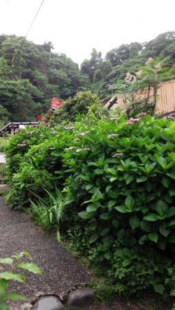 f:id:nonchiko:20140623010118j:image:w150