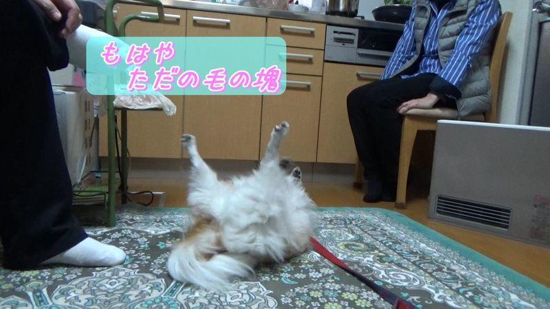 f:id:nonkorokazoku:20200510164448j:plain