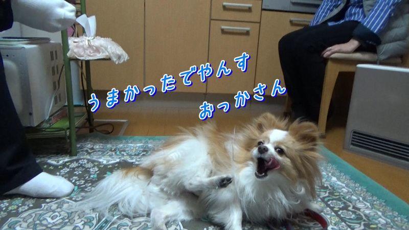 f:id:nonkorokazoku:20200510164456j:plain