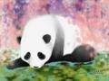 蓮池で涼むパンダと、藤の花のカーテン
