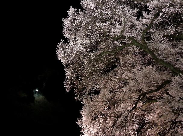 f:id:nonohana-komichi:20180403230733j:plain