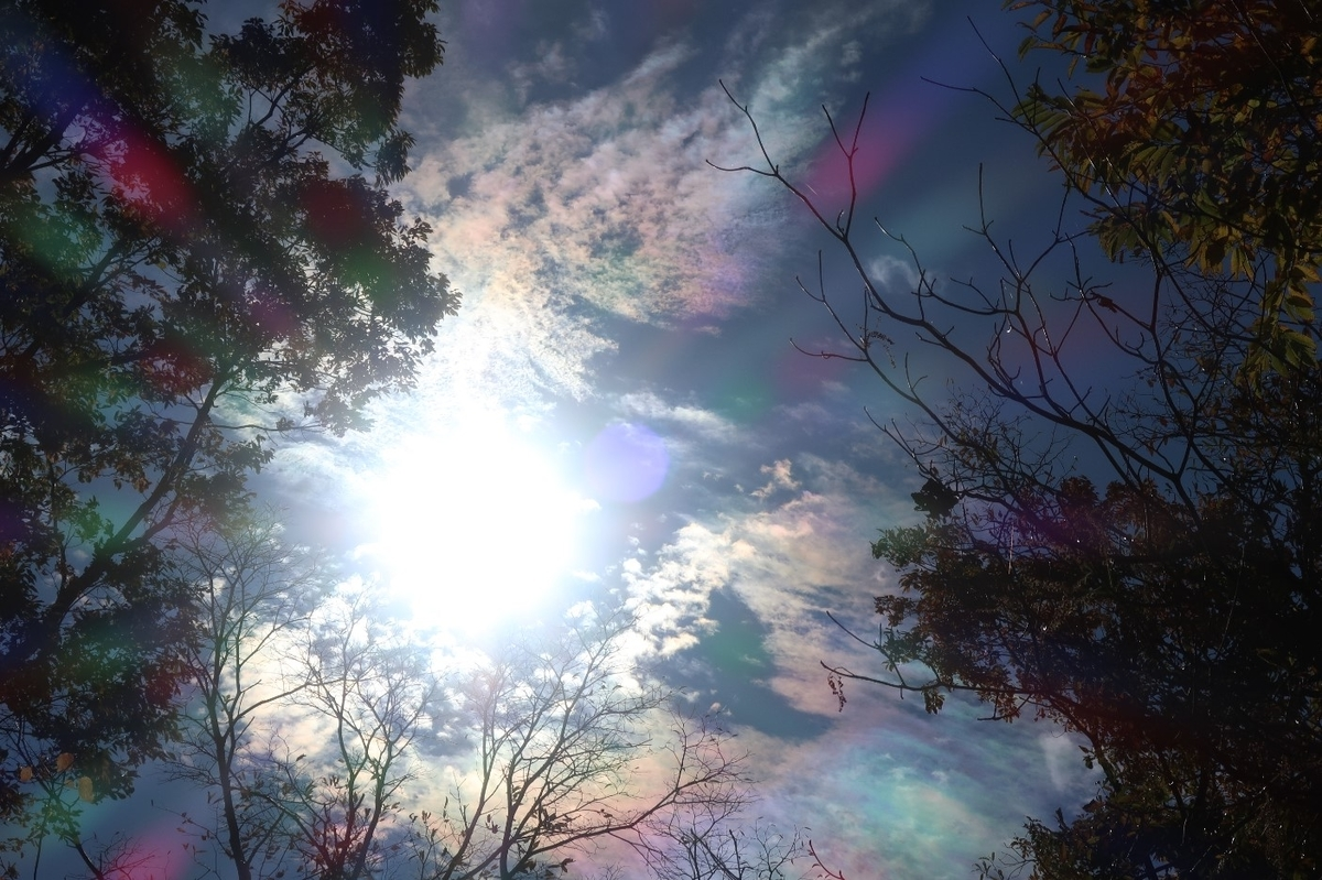 f:id:nonohana-komichi:20191226192416j:plain