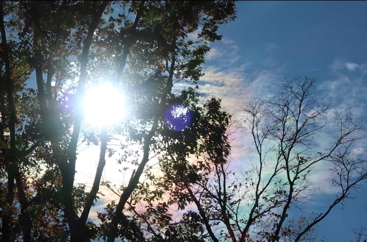 f:id:nonohana-komichi:20191226192438j:plain